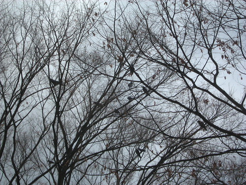 Crows at Yoyogi Park