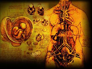 Morfología / Estudio de las estructuras internas de las Formas