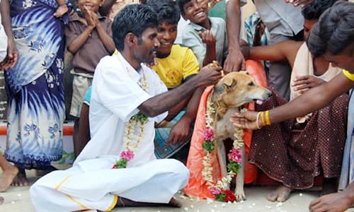 Niña y perro se casan para enfrentar los malos espíritus  3285312598_1976194b3e
