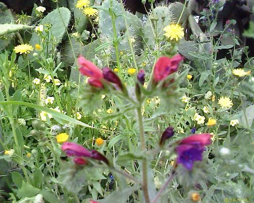 Fleurs sauvages أزهار برية