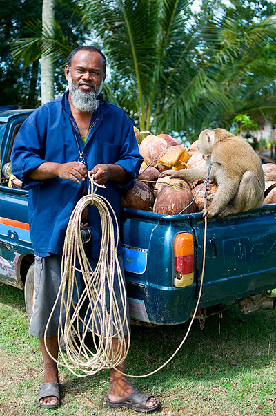 Local who uses monkeys to gather coconuts, Ko Yao Noi