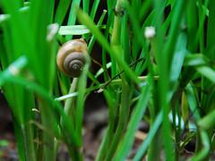 Snail (raydcastillo) Tags: raymond castillo baguiocity