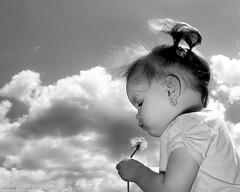 happy mother's day... (derek raugh) Tags: blackandwhite spring child dandelion derekraugh