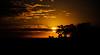 17:38 p.m. - ÚNICO (Claudia Oseki) Tags: road brazil sky sun tree nature sunshine yellow brasília brasil landscape bush shine paisagem céu goiânia goiás silhueta silhuette justclouds