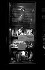 Rouverture bientot (Deyrolle after the fire) (James Mundie) Tags: blackandwhite bw signs paris rabbit heron monochrome architecture fire swan streetphotography monochromatic taxidermy tragedy shopwindow fr parisian biancoenero parisfrance blancetnoir deyrolle mundie schwarzweis copyrightprotected blancoynego taxidermists jamesmundie jamesgmundie profjasmundie deyrollefire fireatdeyrolle jimmundie copyrightjamesgmundieallrightsreserved