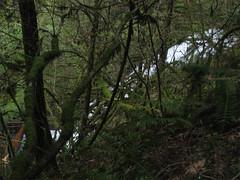 LargeLindseyWaterFall (pauljess999) Tags: hiking wyeth columbiarivergorge lindseycreek