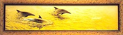 Into the Light - common dolphins (thetotemhunter) Tags: art archaeology nature birds animals pencil painting penguin artwork eagle dolphin wildlife seagull baldeagle lion drawings fox flyingfox mythology lioncub coloredpencil artexhibition natureart primativeart wildlifeart coloredpencilart wildlifeartwork naturedrawings coloredpencilartwork artworkexhibition coloredpencilexhibition mythologyart archaeologyart
