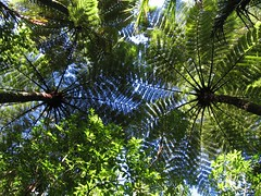 Fern roof Photo