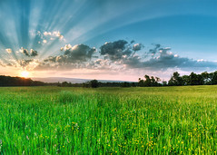falls road sunset ([Adam Baker]) Tags: flowers light sunset summer sky panorama sun tree nature field grass clouds contrast canon landscape weeds farm crossprocess wideangle tokina rays ithaca roadside stitched hdr tompkins buttermilk lightrays buttermilkfalls sunstreaks artisticexpression photomatix 1116 adambaker 40d anawesomeshot canon40d goldstaraward thegreatshooter tokina1116mmf28 tokina1116