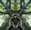 Bosco di Rinck (Elido Turco - Gigi) Tags: italy sculpture alberi reflecting dream creatures ohhh bosco friuli riflesso scultura rinck turco elido speculare elidoturco