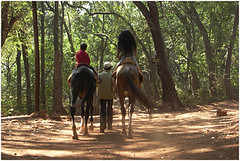 through the woods, matheran (nevil zaveri (thank you for 15 million+ views)) Tags: horses horse woman pet pets india sports station animals kids forest children photography photo blog kid woods women photographer child ride photos action hill stock mother son games images riding domestic relationship photographs photograph jungle western leisure maharashtra myfamily zaveri rider hillstation matheran stockimages ghat nevil akash nevilzaveri
