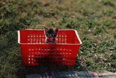 [フリー画像] 動物, 哺乳類, ネコ科, 猫・ネコ, 子猫・小猫, 200807141200