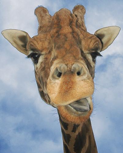 Hey Funny face!