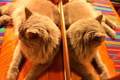 Four  ears (R.Waxman) Tags: cat loveit ilovemypics