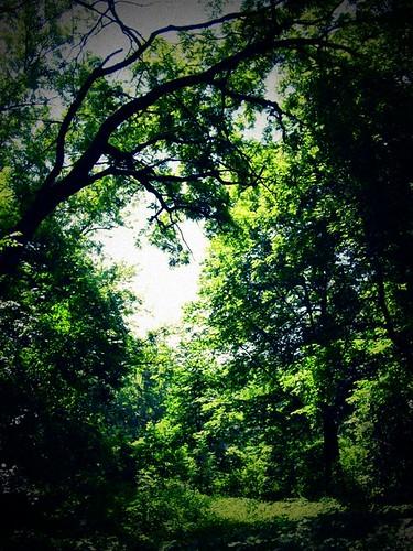 Pammel Park Verdue
