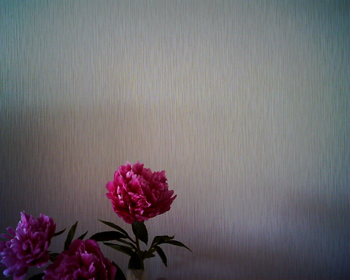 【写真】VQ1005で撮影した芍薬の花