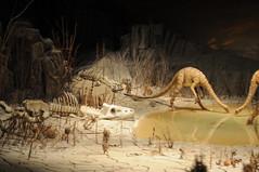 Primeval World (Joe_B) Tags: train dinosaur disneyland diorama 50mmf14 sauropod 50mmf14d primevalworld camera:make=nikon camera:model=d300 2008525 exposure:shutterspeed=160 lens:name=50mmf14 lens:type=d lens:focallength=50 exposure:fnumber=f14 exposure:ISO=560 roll10407 event:code=2008525 roll:num=10407 primevalworlddiorama brachiosaurids shot972 image:shot=972