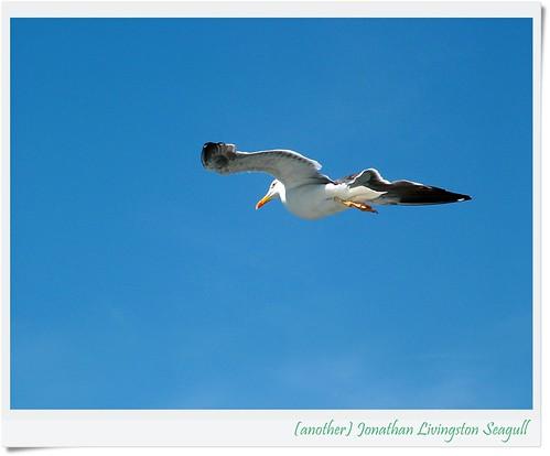 """""""JonathanLivingston by friendsofarnon, on Flickr"""""""