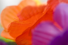 (.mook) Tags: instantfave colourartaward artlegacy