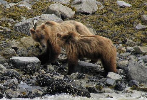 grizzlytalk