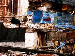animesalve (hydrusa_) Tags: cats barche le e di gallipoli gatti tra rovine abbandonate sedotte