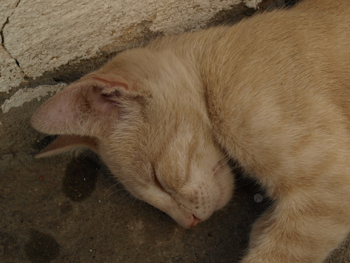 Cats in Algeria II-3