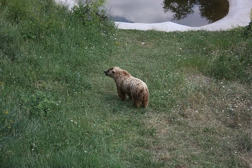 Belitsa Dancing Bears