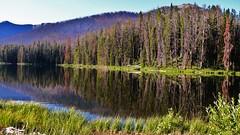 Yellowstone National Park (Surender Bodhireddy) Tags: nature welltaken onlyyourbestshots ilovemypic onlythebestare mothernatureatherbest bestnaturetnc07