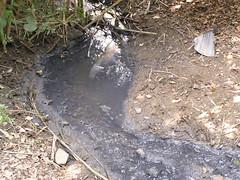 Sediment argilós