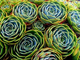 HMB succulents-1