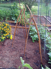 teepees for sugar snap peas