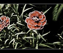 (Joan Bruns) Tags: red naturaleza macro planta fleur beautiful vacances rojo awesome flor joan catalonia panasonic rbol catalunya vacaciones barruera fz7 brunes abigfave platinumphoto goldstaraward flickrestrellas bruns flickrlovers grouptripod