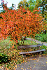 Ukraine, Kiev. (lights2008) Tags: park autumn art fall colors colours ukraine kiev  hdr