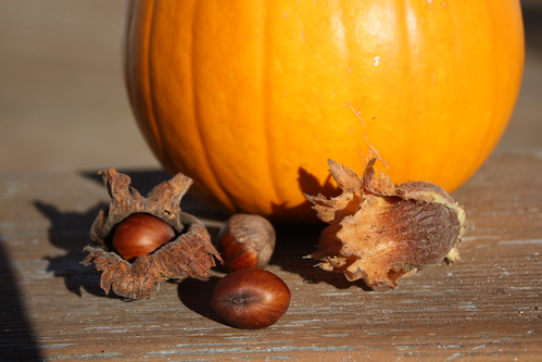 Hazelnuts and Pumpkin