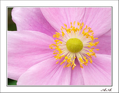 Sencillez (olyverde2007) Tags: pink naturaleza flores flower macro texture textura nature beauty closeup flor rosa olympus e3 belleza flore uro 50mmmacroed