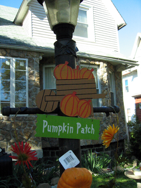 Pumpkin Patch (Click to enlarge)