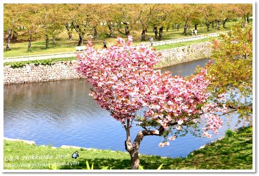 Hokkaido_2130