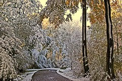 Snow and Sun before Christmas (algo) Tags: trees england sun snow leaves photography topf50 topv333 bravo track topv1111 topv999 trunk algo topf100 100f chilternforest 50f outstandingshots mywinners abigfave 81030 200850plusfaves