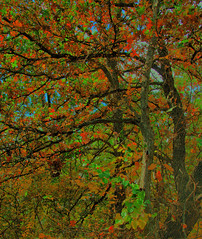 Fall in the Forest (Jeff Clow) Tags: autumn fall nature colorful raw dfw jeffclow nikkor18200mmvr dynamicphotohdr ©jeffrclow