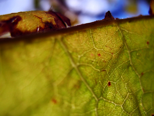 Leaf:  November 5, 2008
