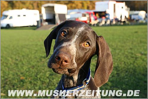 Schlittenhunde in Borken - Fotos Helmut Dietz, Musherzeitung.de, Bielefeld