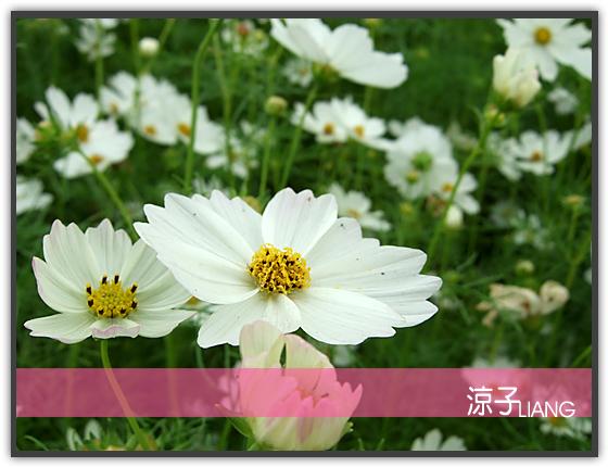新社花海15