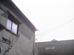 【写真】Sunlight (izone 550)