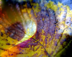 Chestnuts and Roses (AutumnSunOriginals) Tags: autumn green leaves leaf flora stems mysterious ways lys13