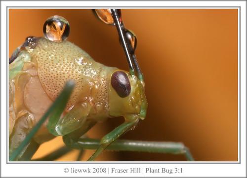14.1 Plant Bug ... ~3.5:1