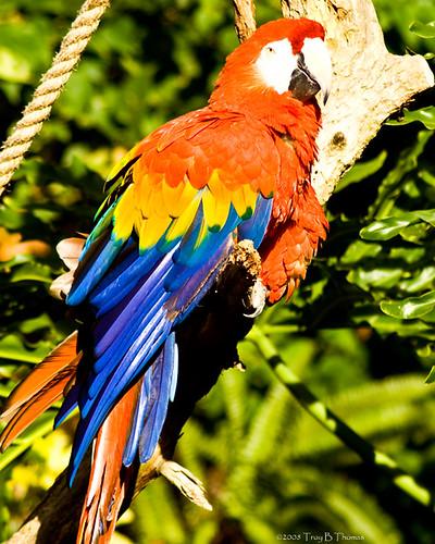 20081126_Bird4
