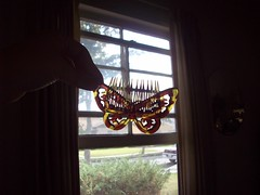(heavy puff) Tags: butterfly hair bedroom comb