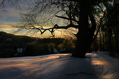 Shadows (24) (BurningQuestion) Tags: trees winter sunset sky sun snow storm tree ice nature weather silhouette clouds landscape shadows hill snowstorm newengland newhampshire icestorm winterweather