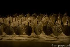20agli (Parnas-io) Tags: madrid photography spain fotografia francesco spagna patafisica pataphisic parnasio papagni