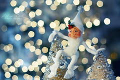 the elf has landed (slcook52 (Sylvia)) Tags: christmas blue bokeh pixie explore elves inmyhouse canon50mm18 hbw bokehlicious omot ehbd copyrightedallrightsreserved crimbo2008
